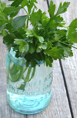 Flat Leaf Parsley Seeds for sale