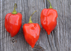 Habanero Pepper Seeds Caribbean Red Hot Peppers