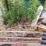 Hill's Hardy Rosemary Container Garden