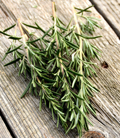 Hardy Hill Rosemary Plant