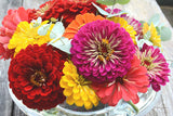 Mixed Benary's Giant Zinnia Seeds
