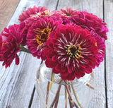 Benary's Giant Wine Zinnia Seeds Large Purple Zinnias