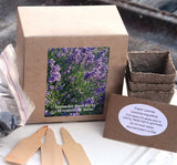 Herb Seed Kit English Lavender Seeds and Growing Supplies