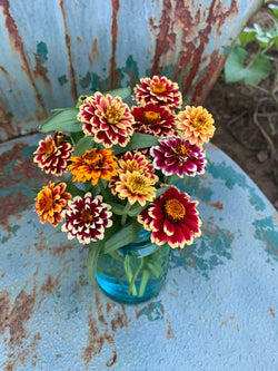 Jazzy Mix zinnia seeds