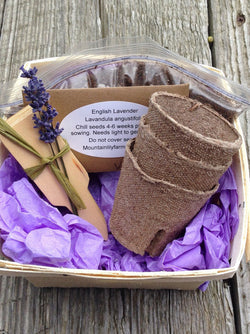 English Lavender Seed Kit