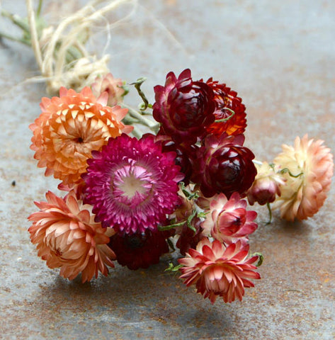 Mixed Strawflower Seeds