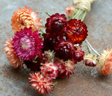 Strawflowers for Dried Flower Projects