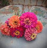 Mixed Zinnia Seeds for Cut Flowers