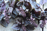 Flowers of Purple Basil