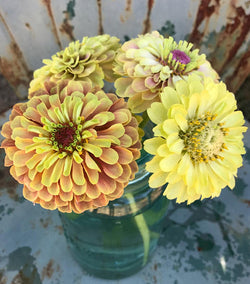 Queen Lime Blush Zinnia Seeds
