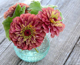 Zinnia Seeds Queen Red Lime Unusual Coloring