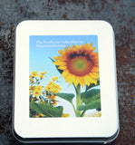Sunflower Seeds in Gift Tin Great for Gardening with Kids