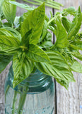 Basil Seeds Large Leaf Sweet Basil