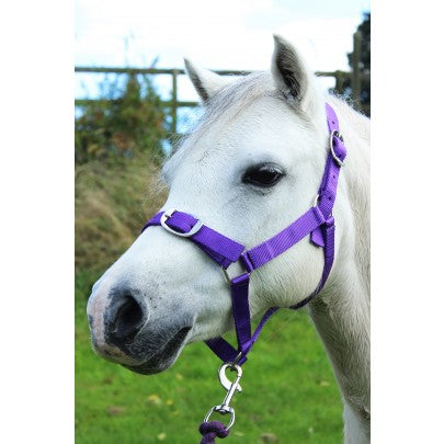 Gallop Head collar and Leadrope Set