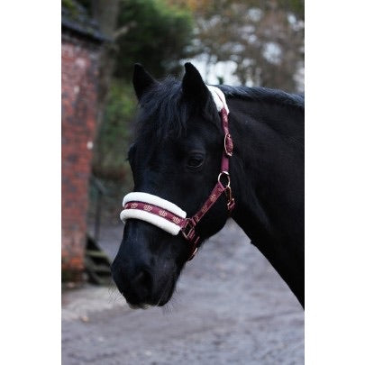 Gallop Monarch Headcollar & Leadrope Set