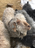 Mohair Rolags and Curly Locks from Galloping Crow Farm