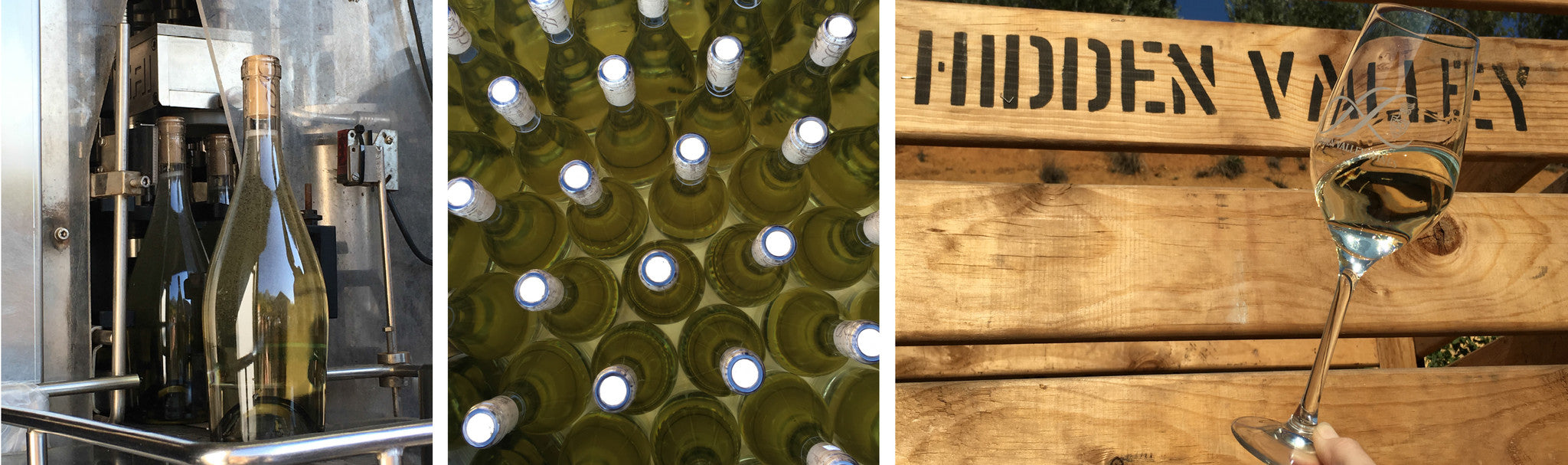 Sauvignon Blanc 2016 Bottling in Pictures