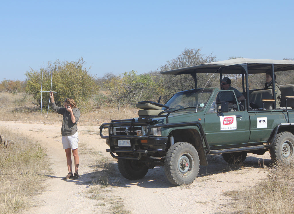 Can you hear me now? Jessica using radio telemetry to locate Umbabat.