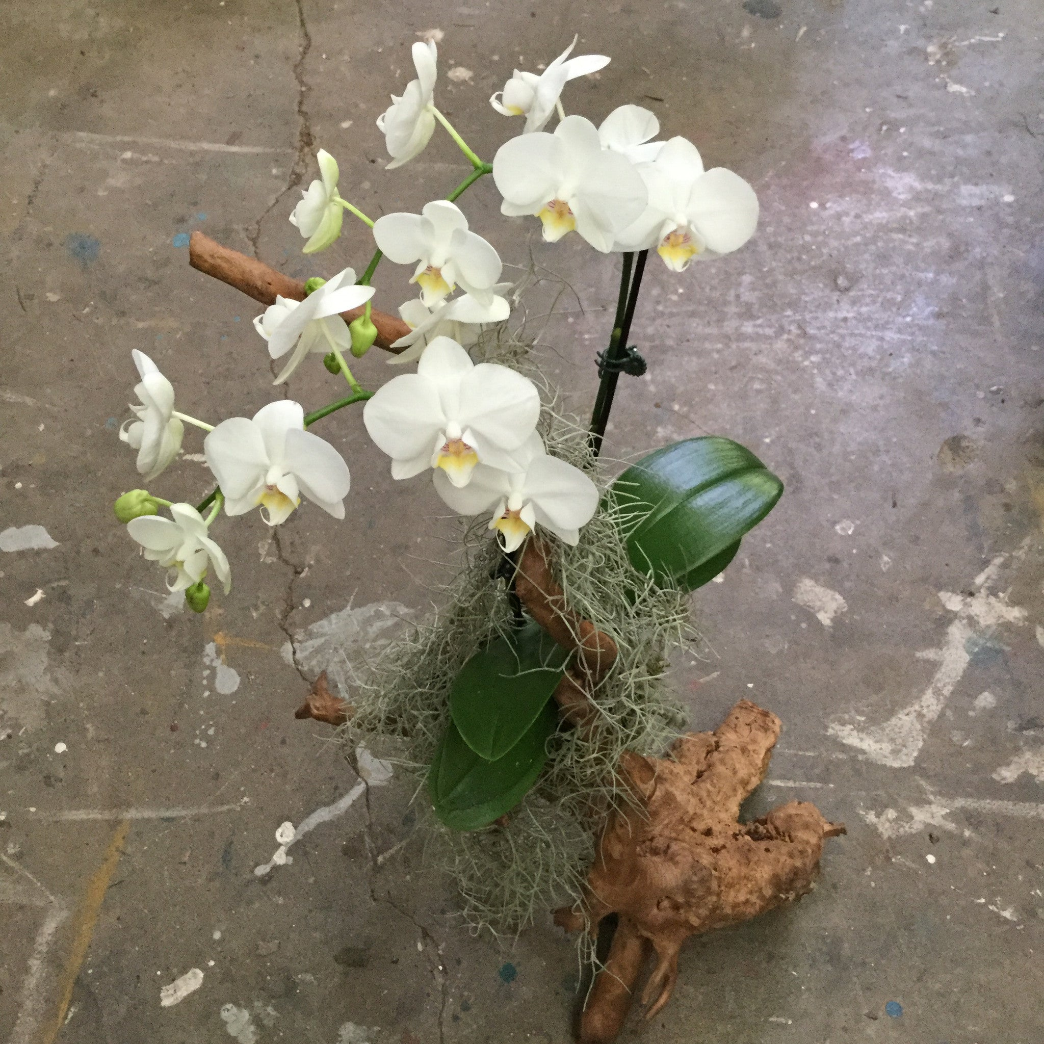 Orchid Centerpiece - September 23