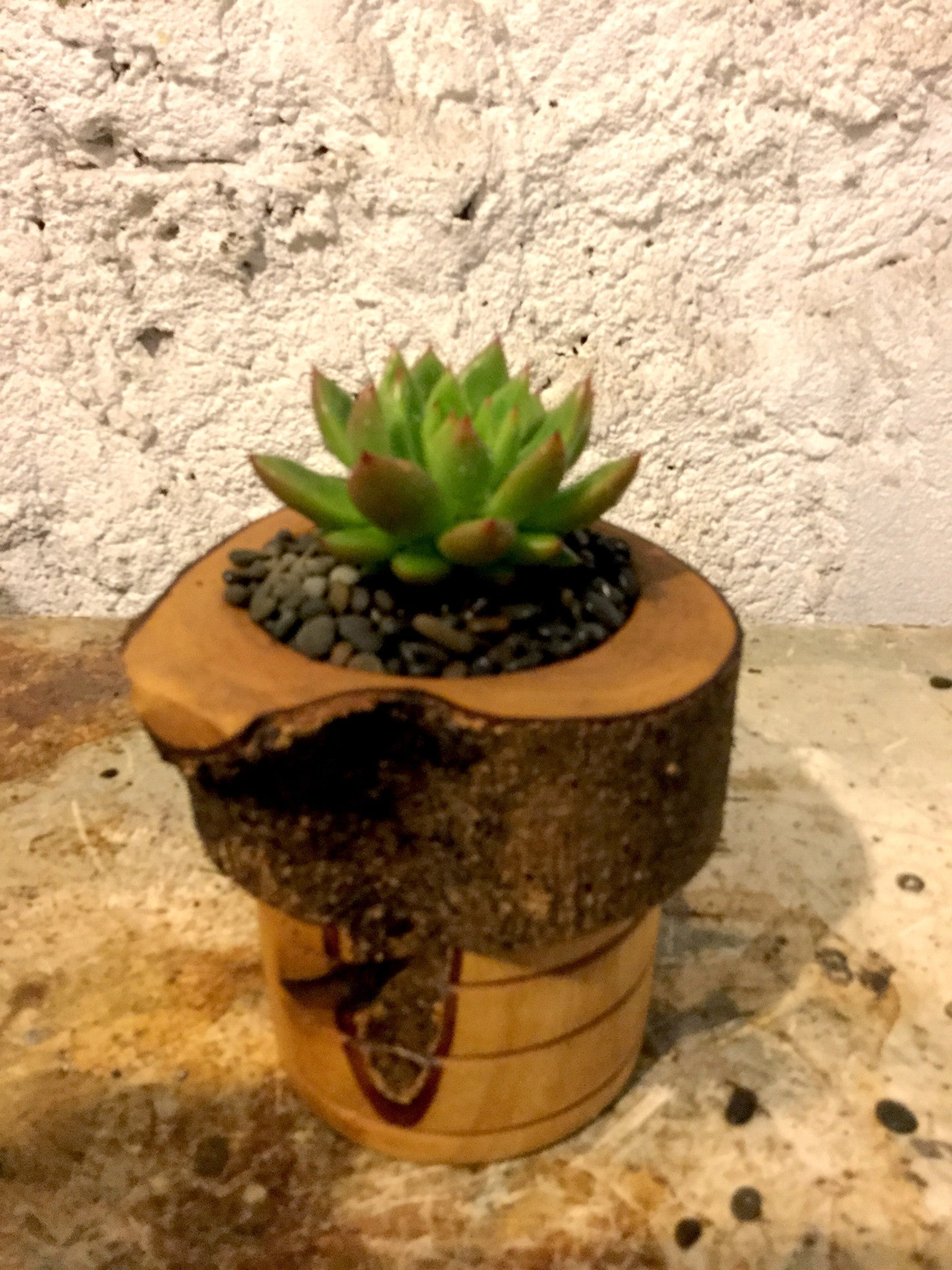 Turned planter - small with succulent