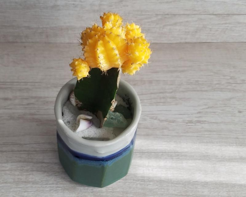 Cactus in Green Pottery