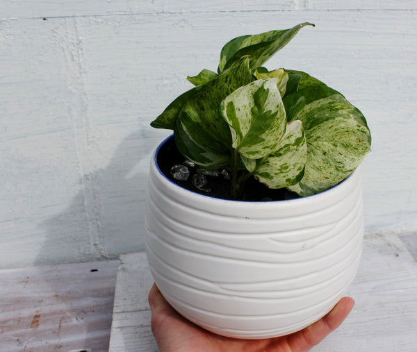 White Ceramic Planter -  the design shoals