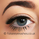 Ardell Fashion Lashes Black 138 - Front Shot