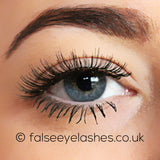 Ardell Studio Effects Lashes Black 110 - Front Shot