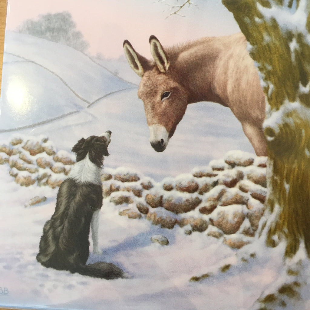 Wildlife Christmas Cards.Donkey And Collie Christmas Cards