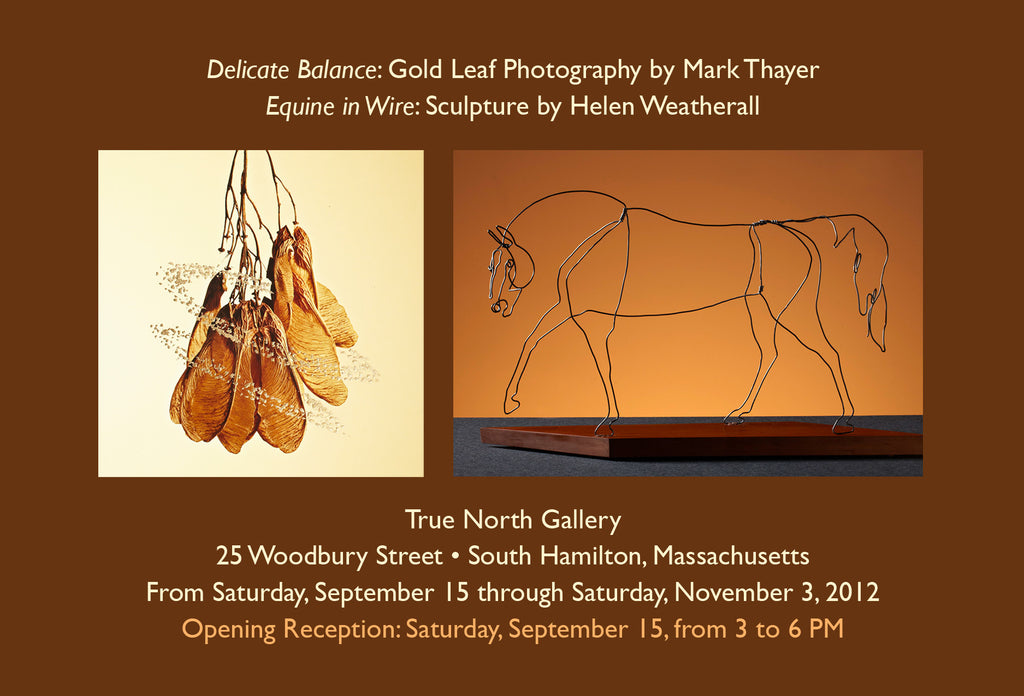 "Two New Shows: ""Delicate Balance"" and ""Equine in Wire"""