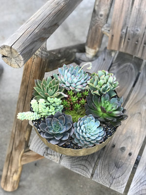 Avery - DESERT ROSE SUCCULENTS