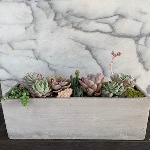 London - DESERT ROSE SUCCULENTS