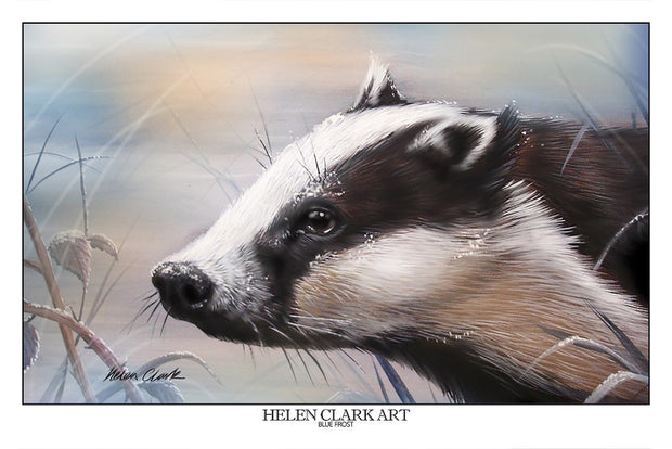 """Blue Frost Badger"" Art Prints"