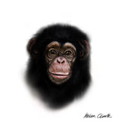 """Little Chimp"" SUPER SIZE Canvas"