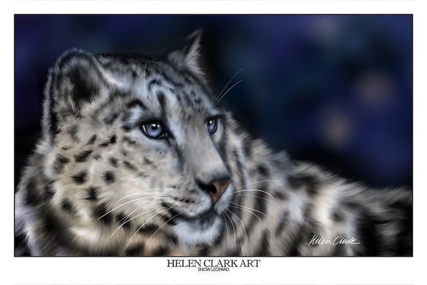 """Snow Leopard"" Art Prints"
