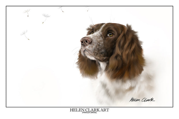 """Springer Spaniel"" Art Prints"