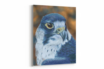 """Profile of a Peregrine"" - A4 Standard Canvas Print"