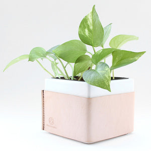 Ceramic leather wrapped white planter with plant