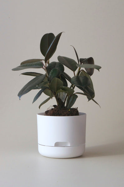 Mr Kitly Self-watering Pots
