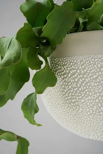 White Water Bead Hanging Planter - Angus & Celeste