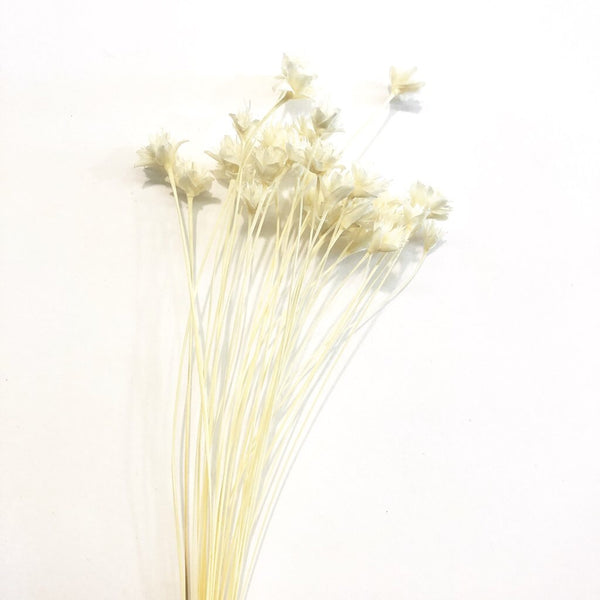 Natural Dry Flowers and Grasses