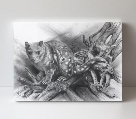 Driftwood Spotted Quoll Greeting Card