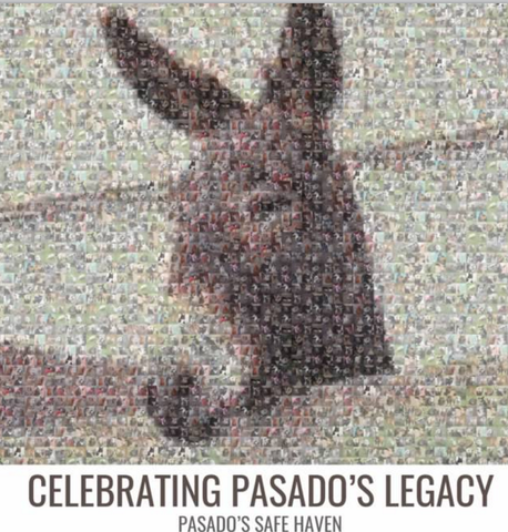COMMEMORATIVE BOOK - Celebrating Pasado's Legacy