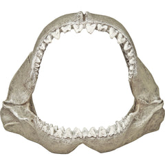Great White Shark Jaws (Polyresin)