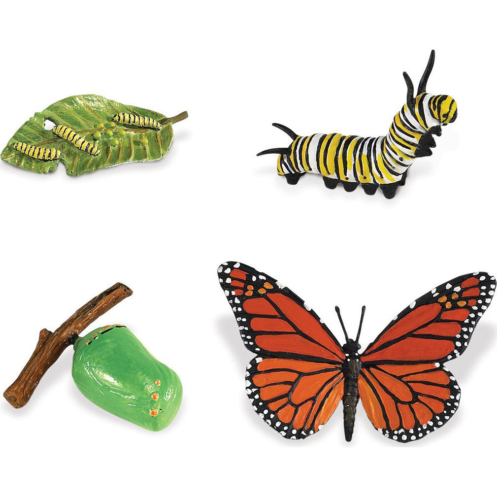 Life Cycle of a Monarch Butterfly Set (4-Figures)