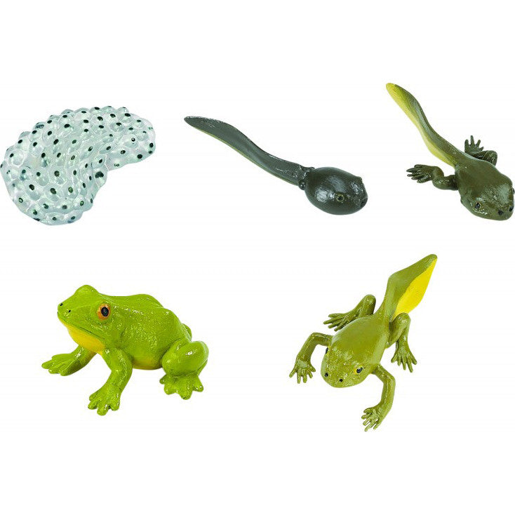 Life Cycle of a Frog Set (5-Figures)