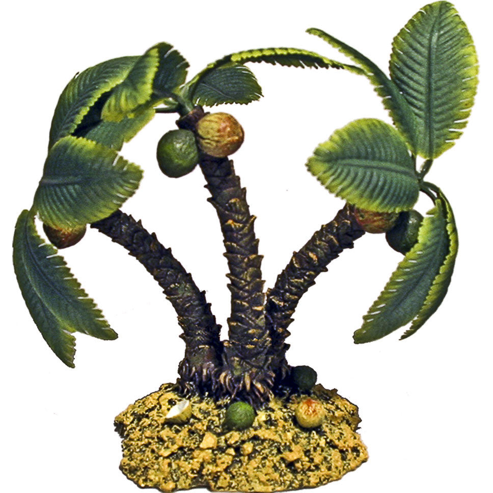 Miniature - Coconut Palm Trees  (Cocos Nucifera)