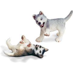 Miniature - Husky Puppies (Playing/ Fighting)
