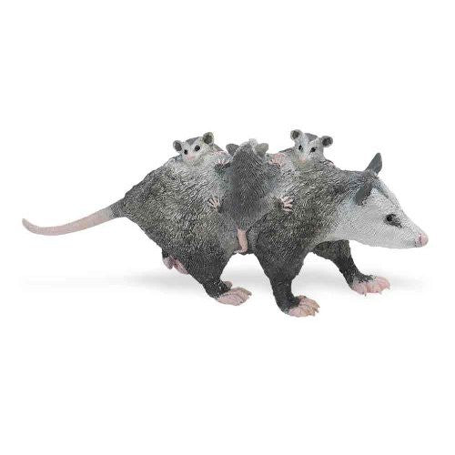 Opossum with Babies