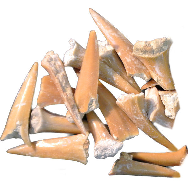(Fossilized) Shark Teeth